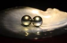 黑美人—黑珍珠